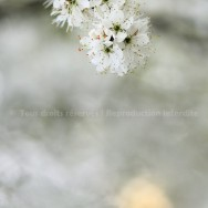 Fleur blanche zen