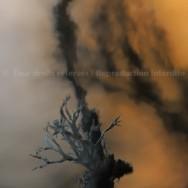 Lichen en flammes